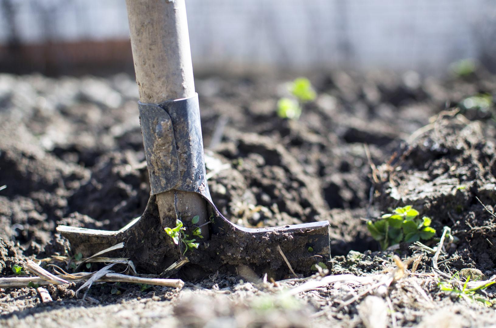 Back of brown shovel pushed into soil