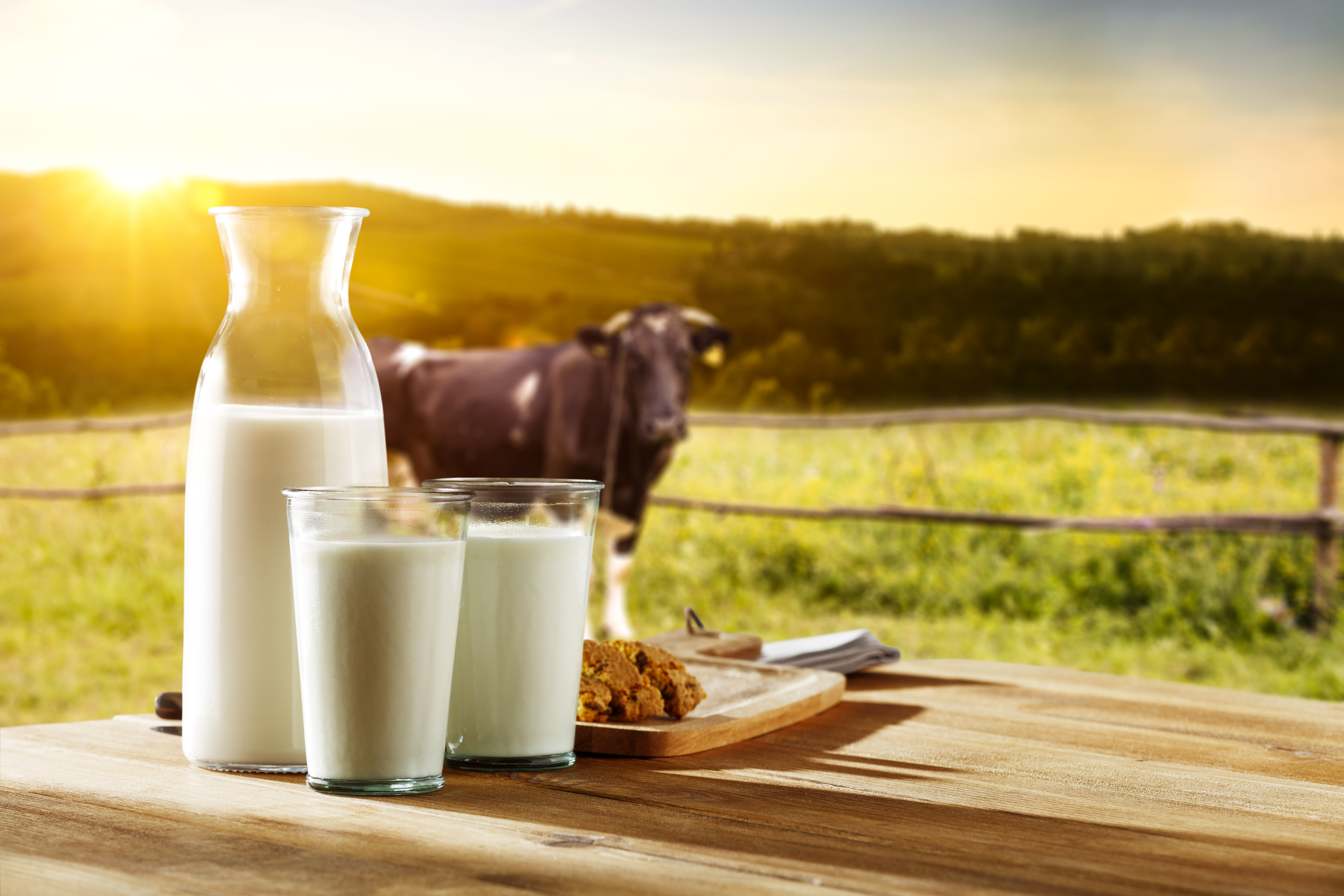 Three glasses of milk sitting on table in front of pasture with cow