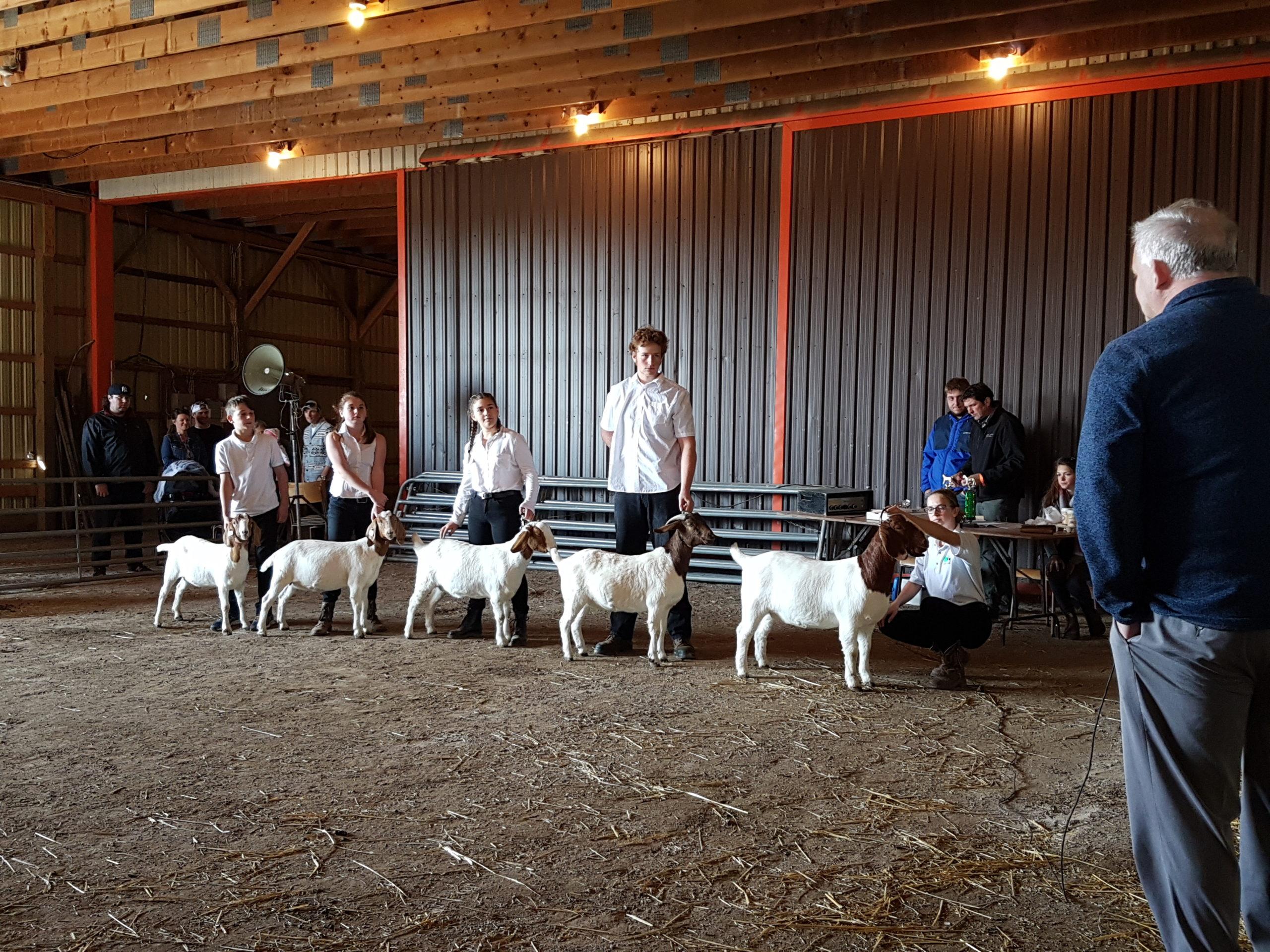 Peterborough Goat