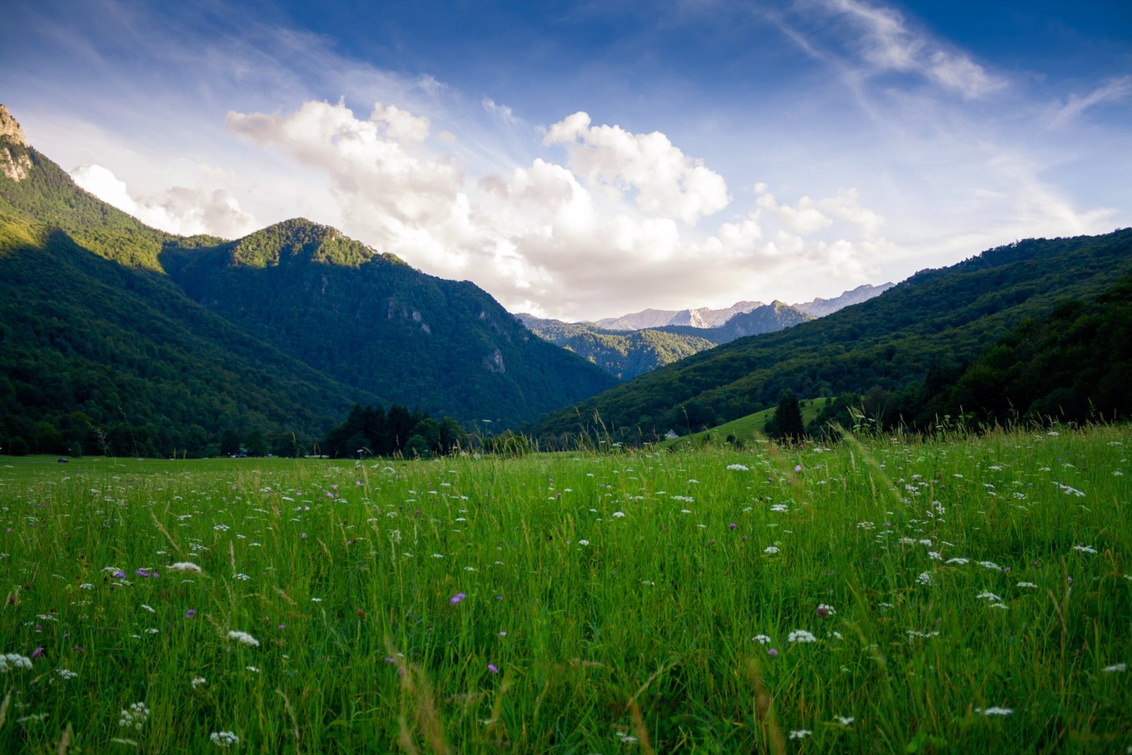 Landscape image of field in front of mountains evening time