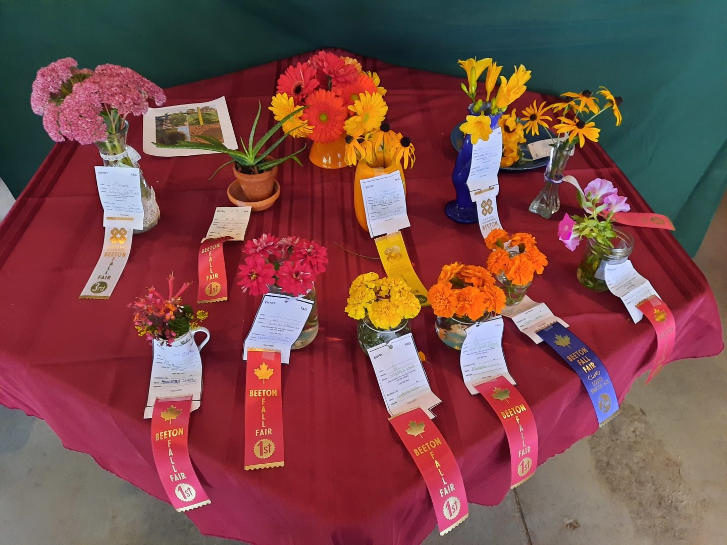 flower blooms with prize ribbons