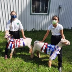 Members compete at 2020 Cookstown and Everett Sheep Club Achievement Day program