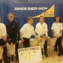 South Simcoe sheep team at the Royal 2019