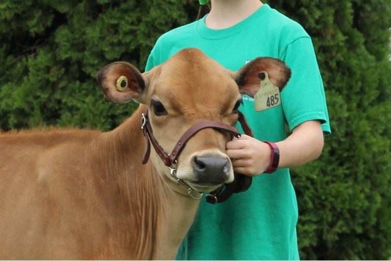 Norfolk 4-H Dairy Calf Club