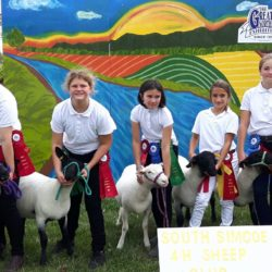 Sheep club members compete at 2019 GNE at Collingwood Fairgrounds