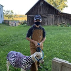 novice member with his ewe lamb that he just washed and put blanket on