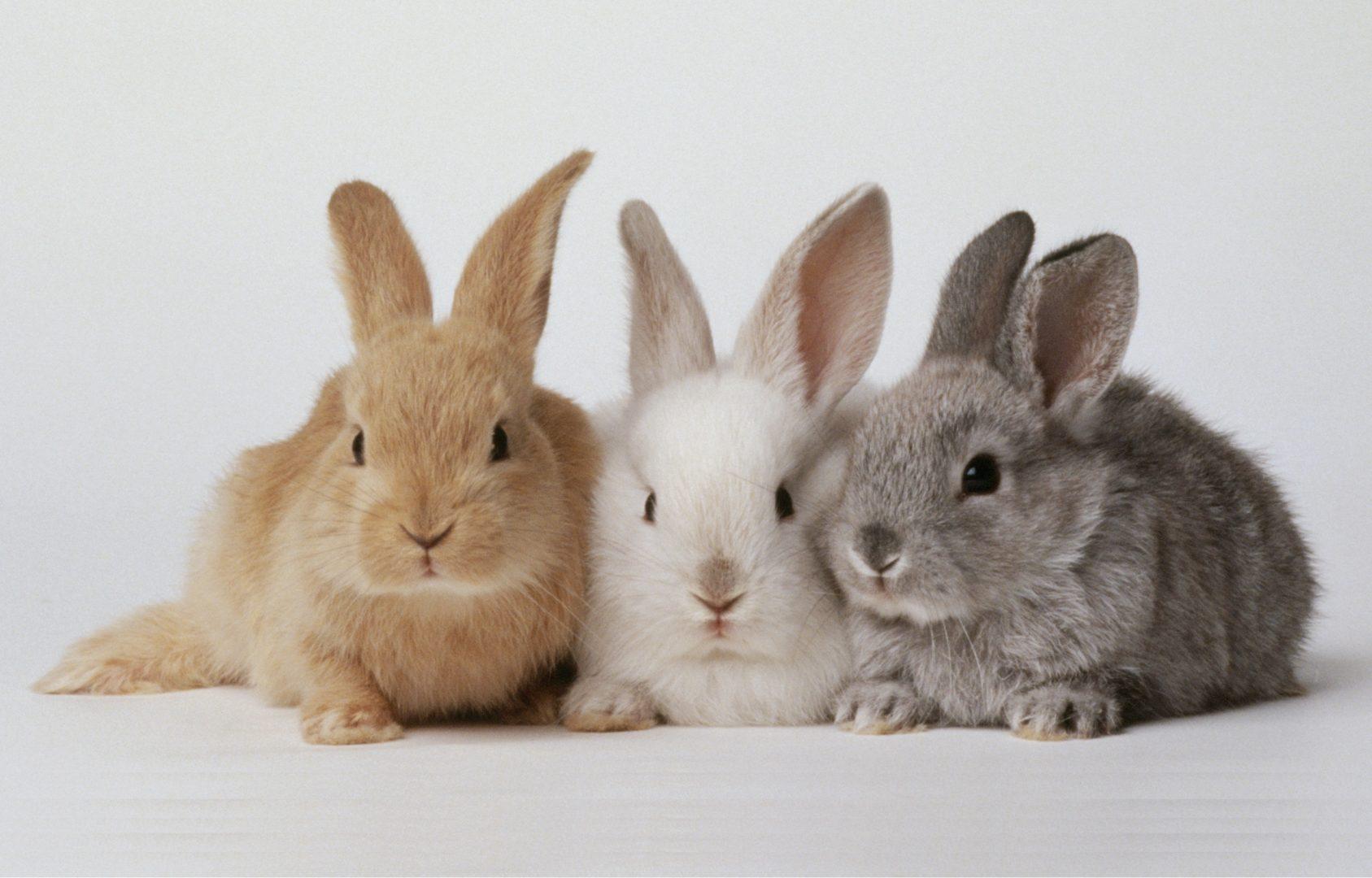Norfolk 4-H Rabbit Club 2