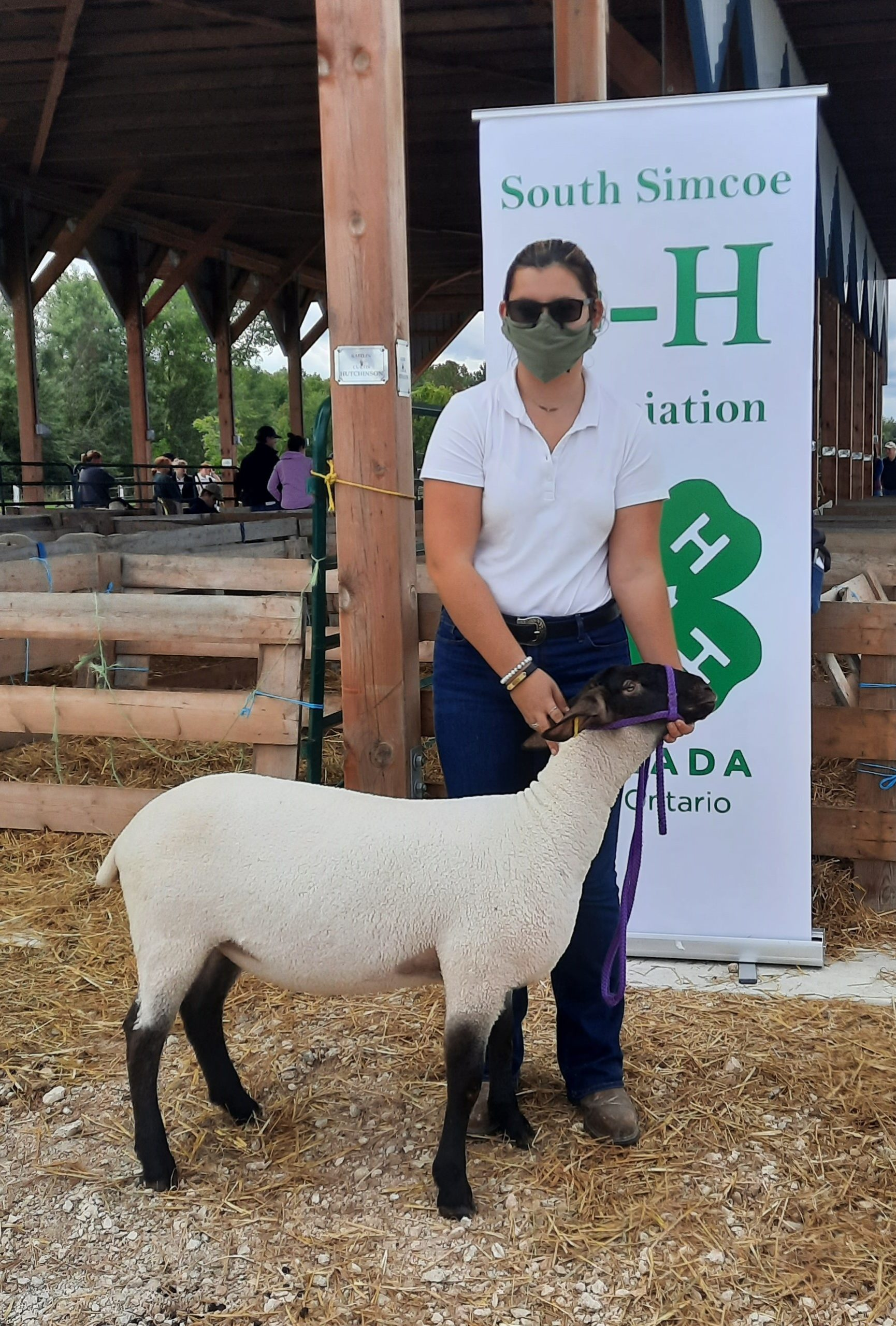 Member with commericial Rideau Arcott ewe lamb