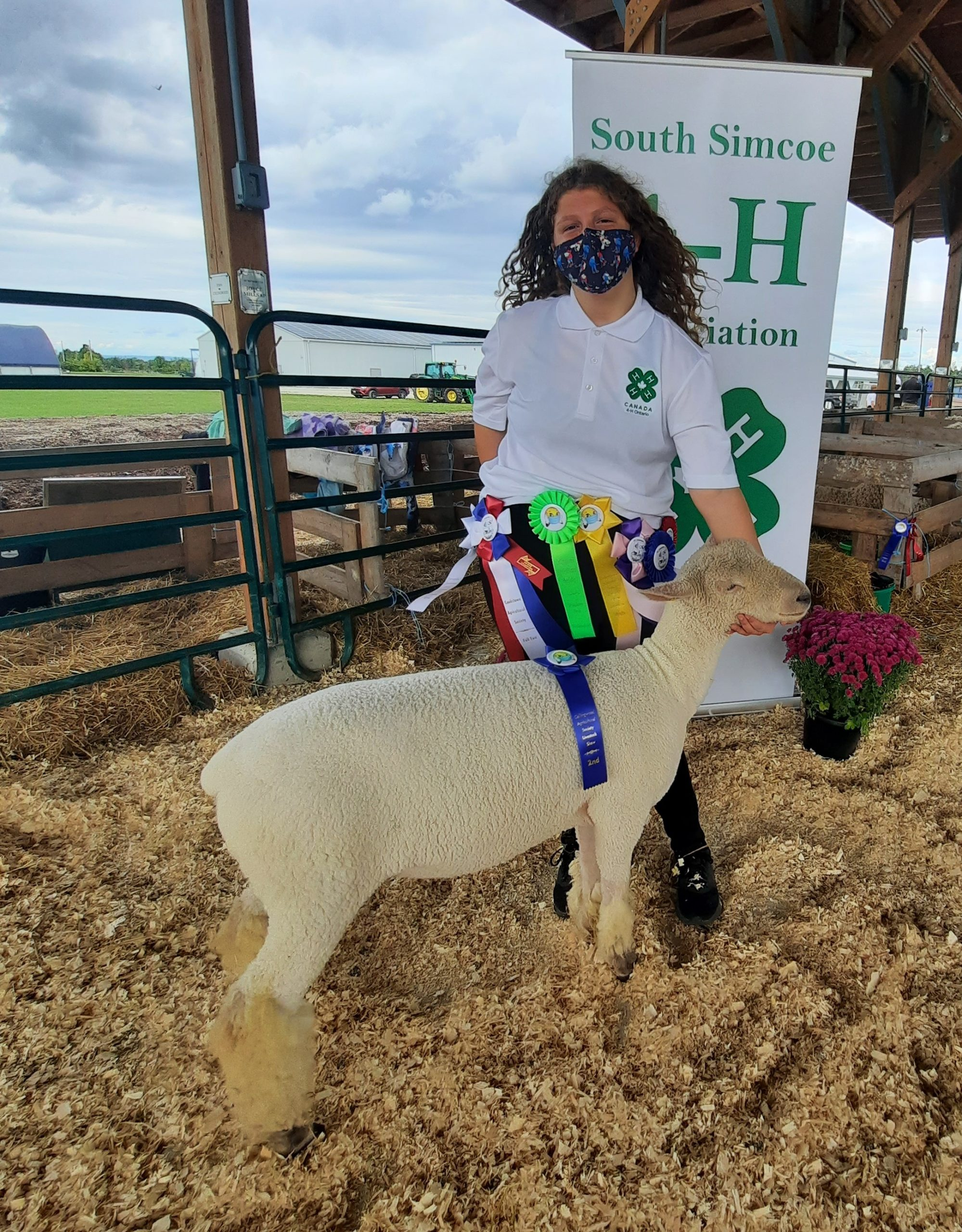 Grand Champion Ewe Lamb for Cookstown and Everett 4-H sheep club 2021. Lamb is a purebred Southdown.