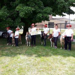 Members and mini horses at Shelburne Festival Parade