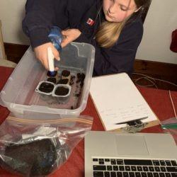 Member planting seeds in cups