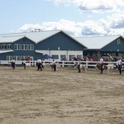 Mini horse members and mini horses in show ring at Barrie Fair 2019