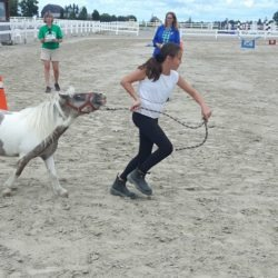 member and mini horse on course