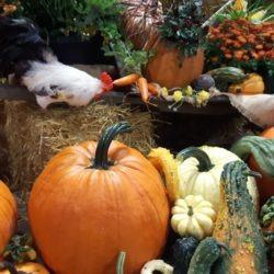 Display of farm produce