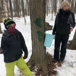 Members hanging bucket in hopes of collecting sweet sap