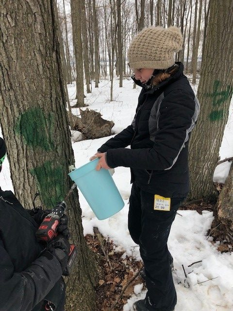 Members have just tapped a tree and hung a bucket to collect sap