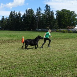 member with her mini horse doing ball and pylon course