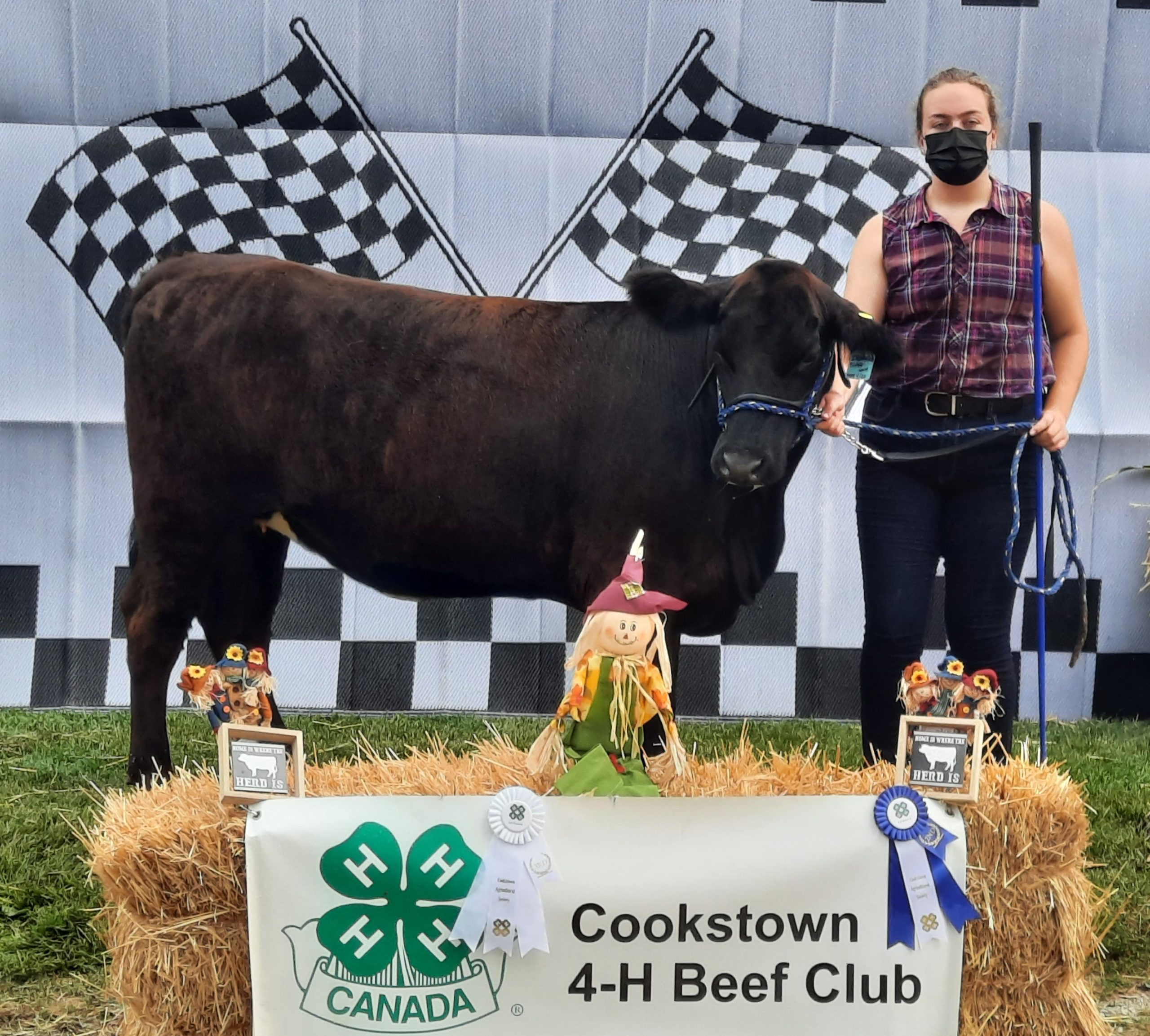 Member with their calf at achievement day