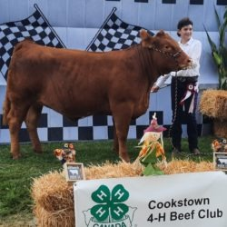 Member and their calf at achievement day