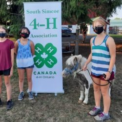 3 members at a 4-H meeting with mini horse
