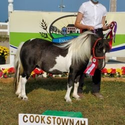 4-H member with 4-H mini horse project