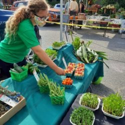 Member setting out produce at the farmers market