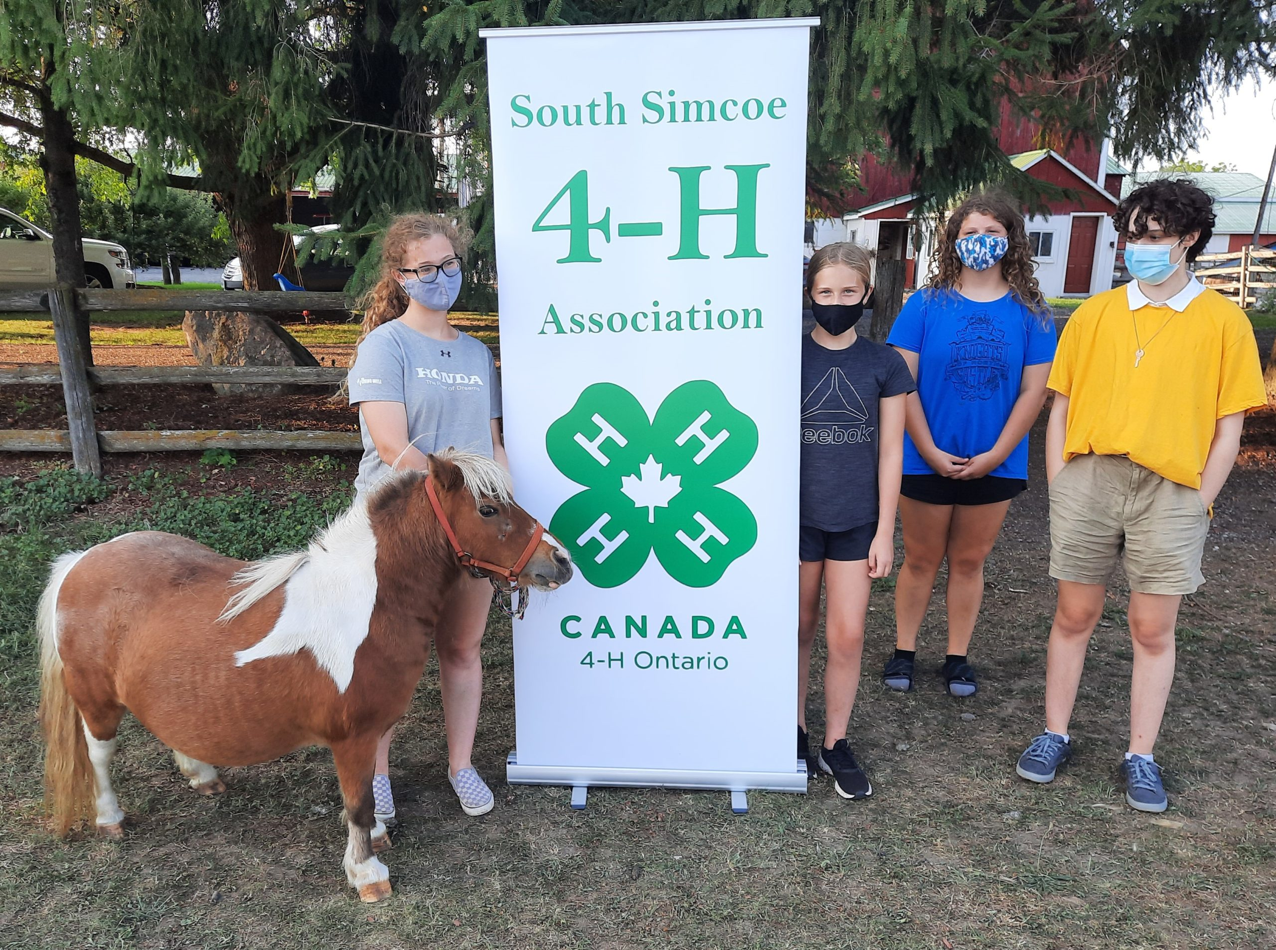 Members at 4-H meeting working with a mini horse